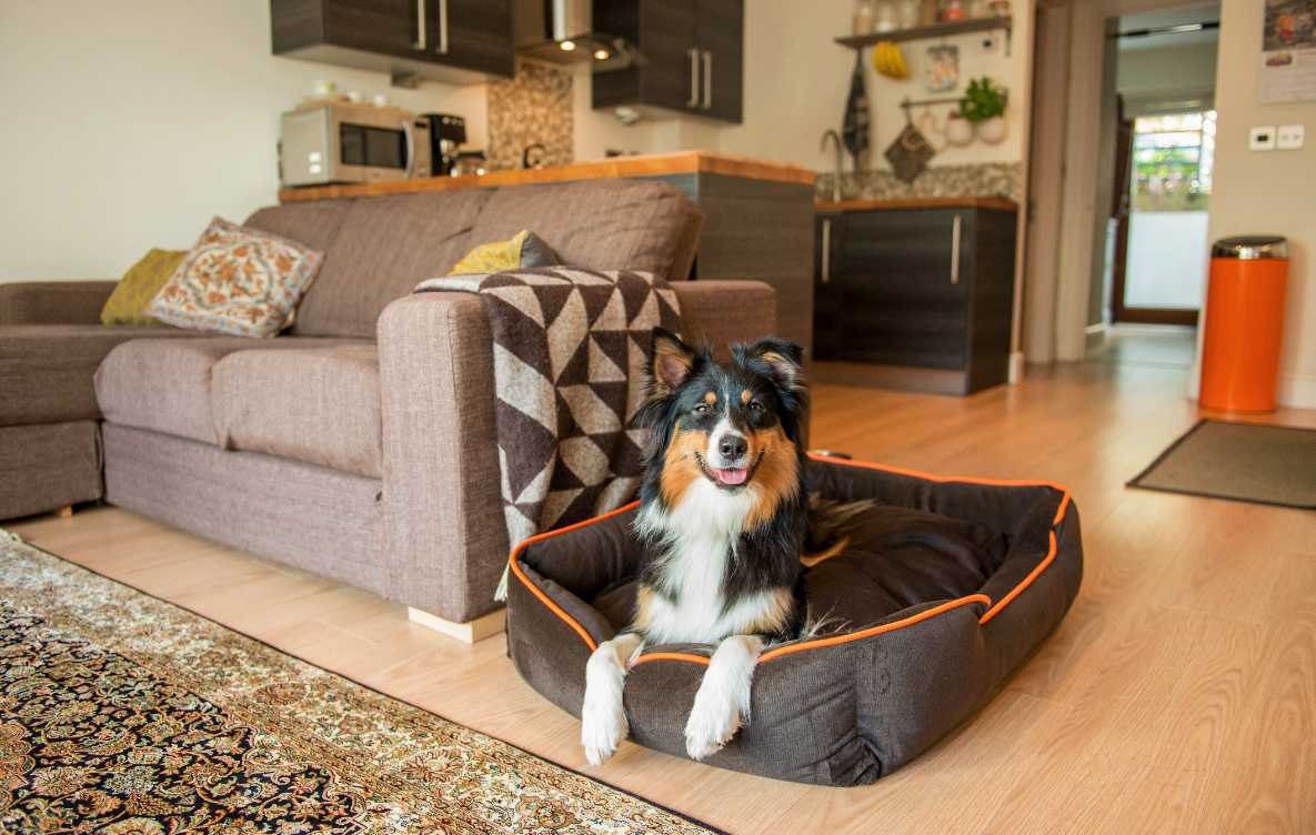 How to keep your house clean, if you have pets