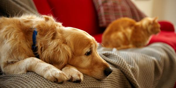 How to keep your house clean, if you have pets dog