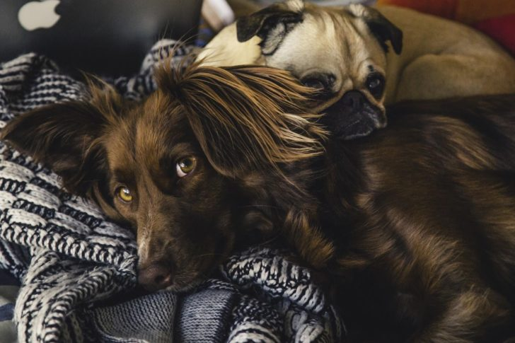 3 Parasites You Need To Protect Your Pets From