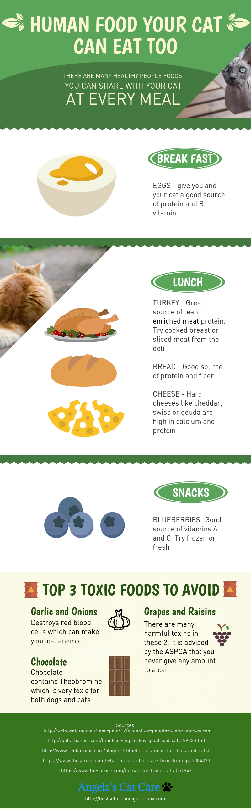 what human food can cats eat?