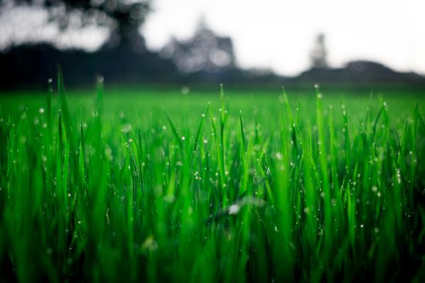 Pushing Up Daisies: Reworking Your Garden