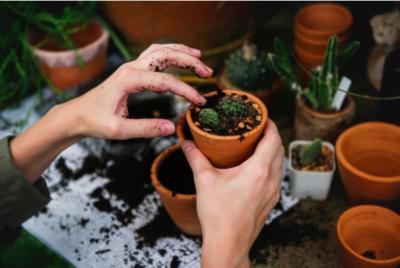 Building Yourself An Easy Upkeep Garden