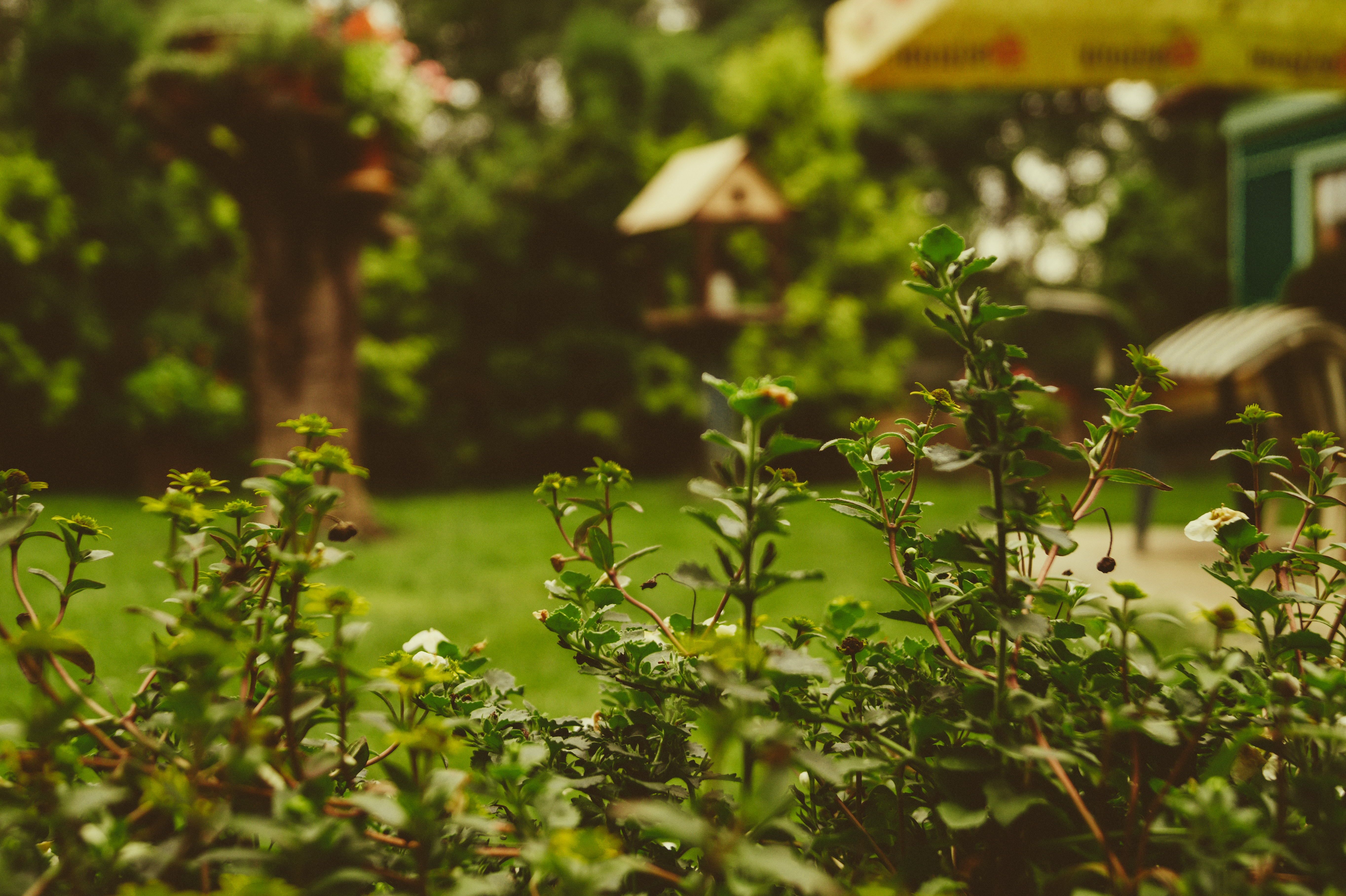 5 Quick Ways to Spruce Up Your Garden for Summer