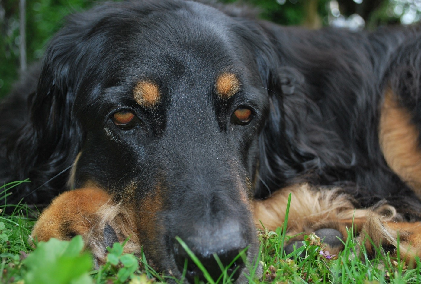 How to protect your dog from Lyme disease?