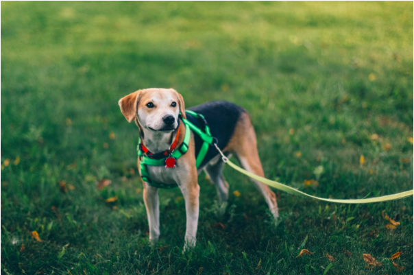 Healthy Dogs: What All Brand New Owners Need To Know