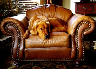 Six Benefits of Hiring Professionals to Clean Your Leather Furniture