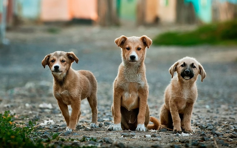 Why Is Nutrition So Crucial For Your Dog's Health & Happiness? three dogs