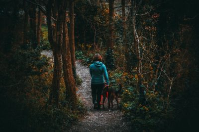 The Do's and Dont's of Safe Camping With Dogs
