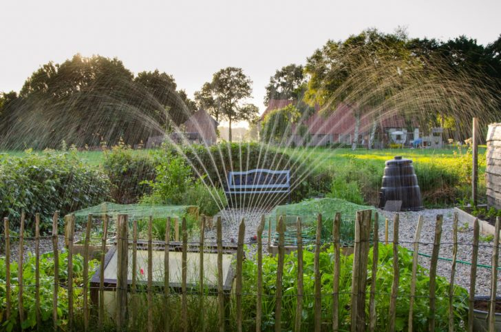 How to Minimize Water Use in Your Garden