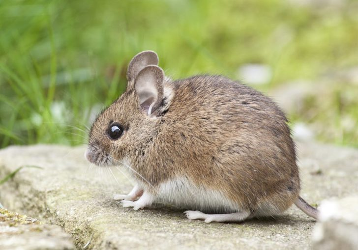 5 Common Colorado Pests and How to Help Keep Them from Entering Your Home