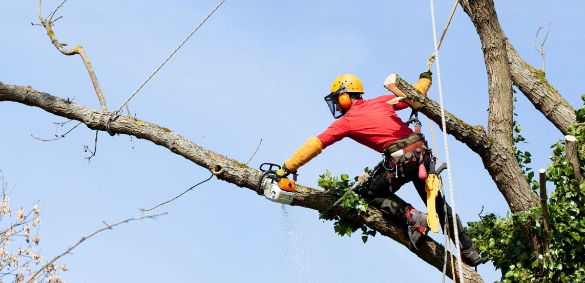 3 Crucial Pieces Of Equipment For Tree Pruning