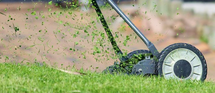 5 Tools You Need to Keep a Neat and Tidy Lawn