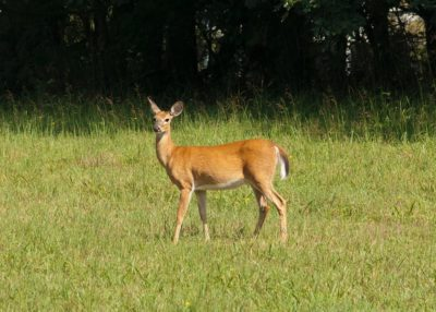 Essential Things To Carry While Hunting White Tail Deer