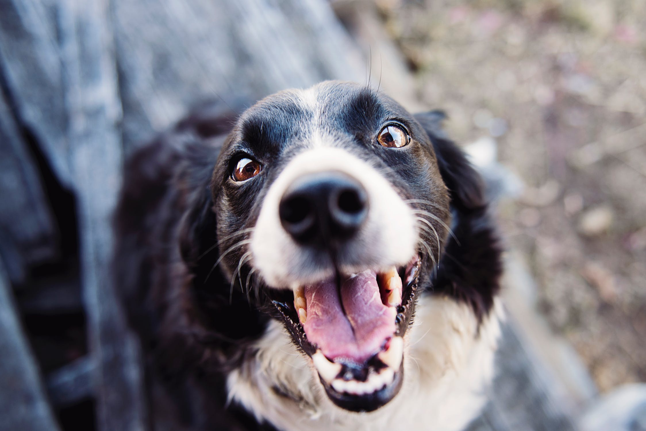Why You Should Take Care Of Your Dog's Dental Hygiene