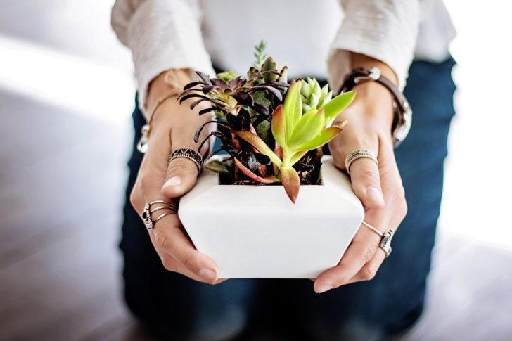 How to grow succulents from a cutting