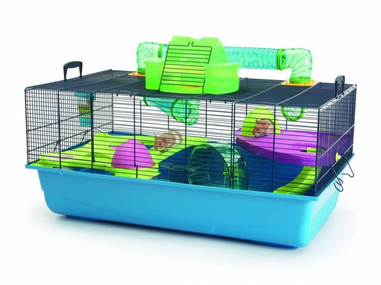 Learn How to Take Care of Small Pets in 4 Easy Ways cage