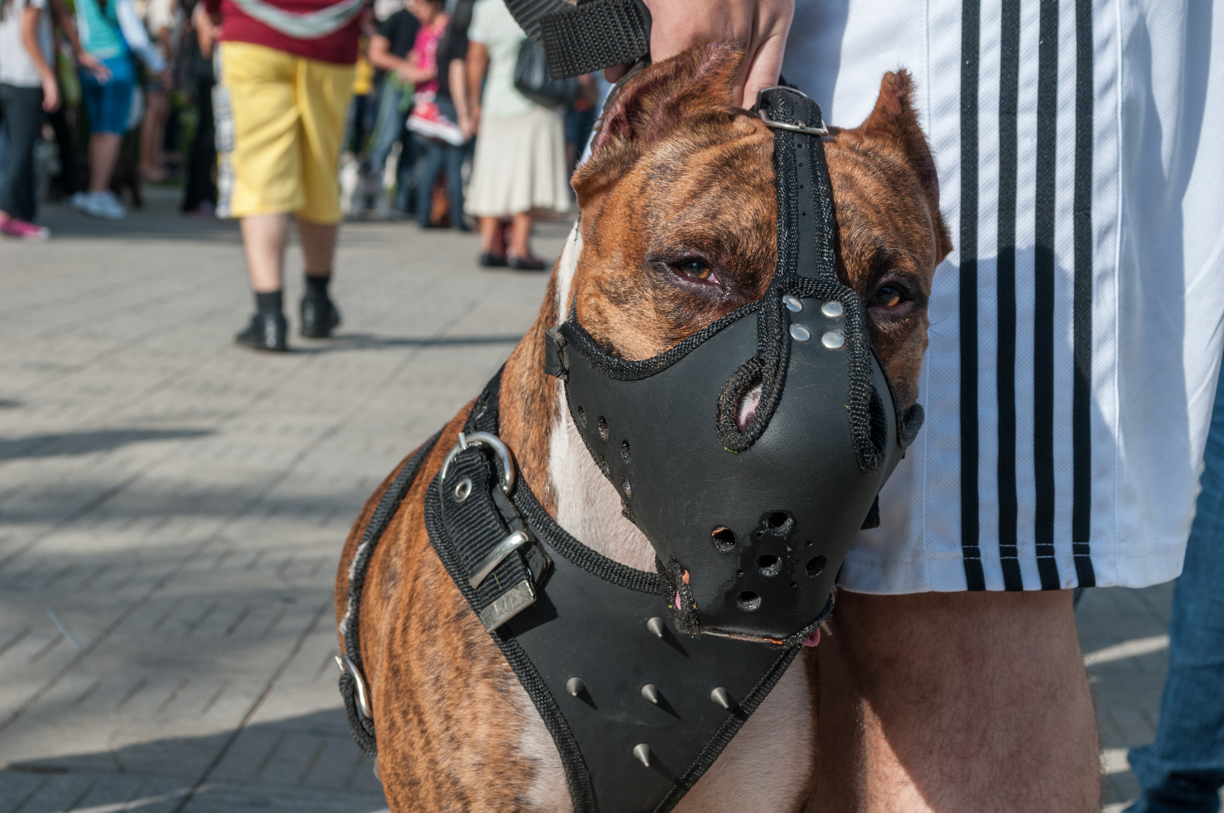 3 Benefits to Using a Dog Muzzle