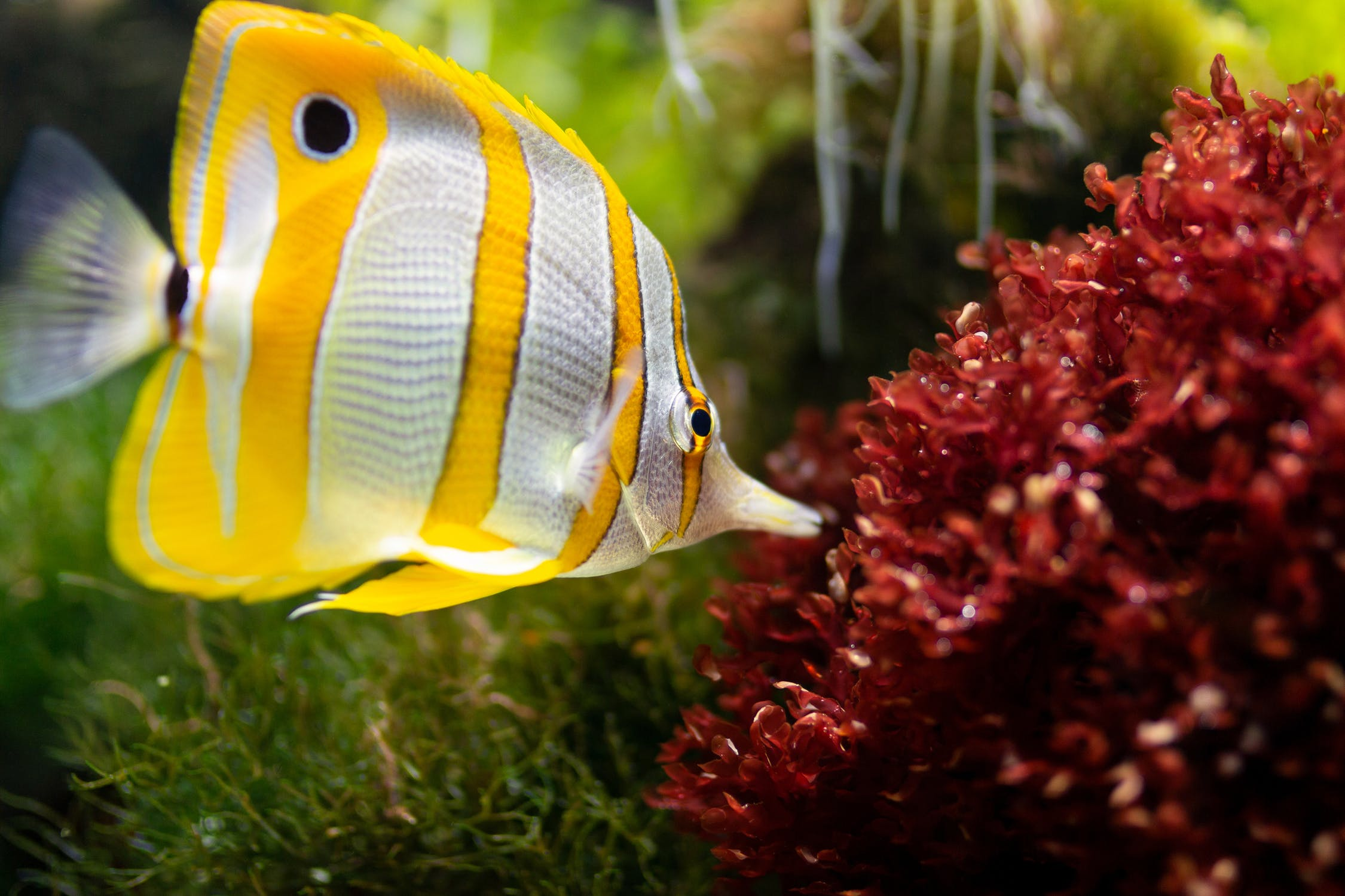 Danner: The Trusted and Innovative Manufacturer in Aquarium Pumps and Fountain Supplement
