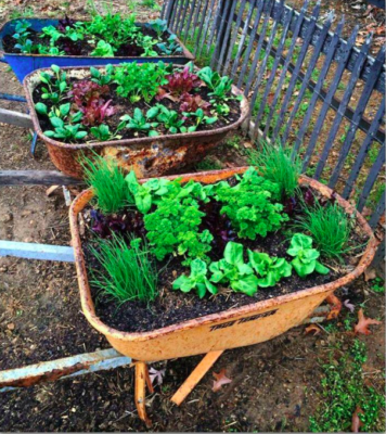 A Guide to Greens: Taking Care of a Food Garden