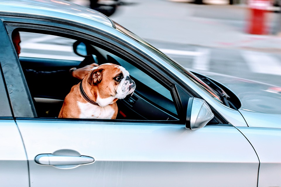 How To Make A Move With Your Pet Less Stressful
