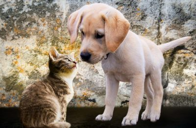 5 Things You Should Never Ignore When it Comes to Your Pets - Health Guide