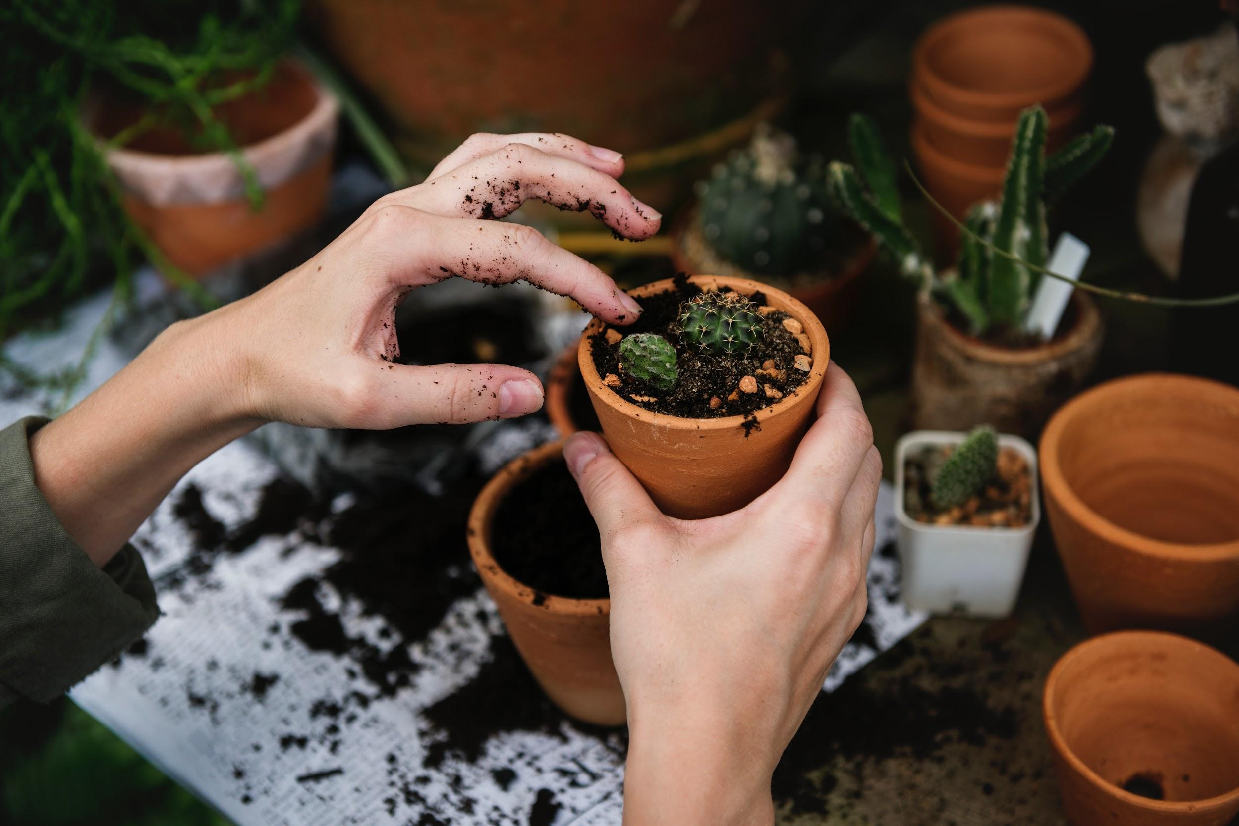Five of the Best Ways to Get in Touch with Nature potting