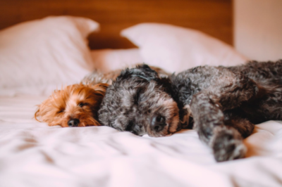 Making Your Home More Pet-Friendly
