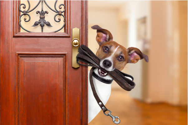 Doggy Doors – Pet-Friendly Additions for Any Home