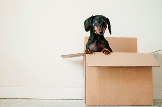 Ideas for Hiring the Best Movers Possible