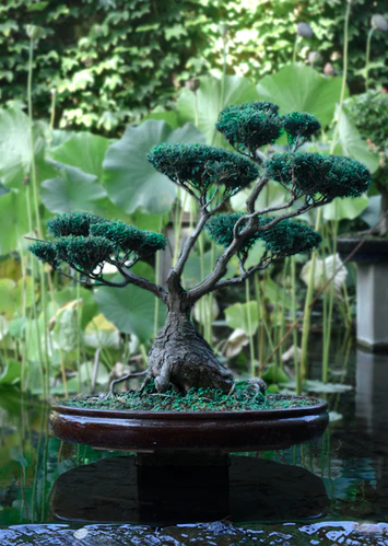 Everything You Need To Know About Taking Care Of A Bonsai Tree And Why