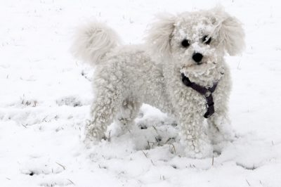 3 Things you should know about Ice Melt Product Dangers for Pets