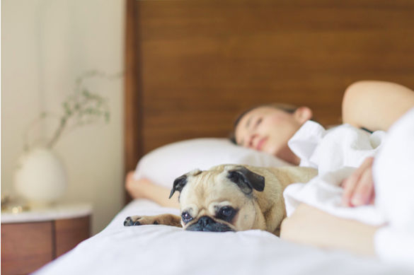 5 Ways to Improve Your Sleep Quality