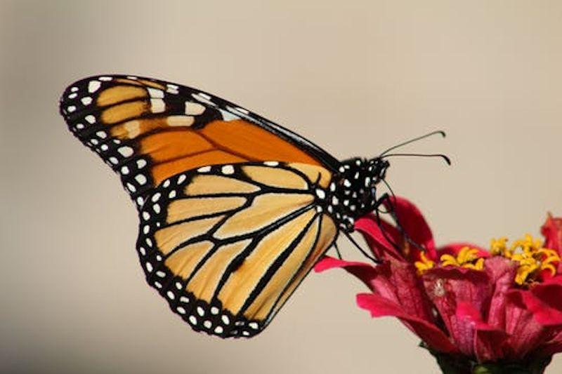 Tips to Make Your Backyard Beautiful Again butterly