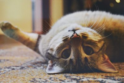 4 Tips to caring for your cat even when you are not home