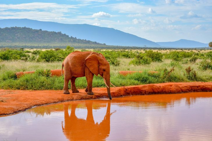 5 Ways an African Safari Changes you Forever