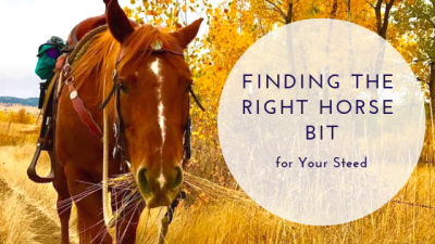 Finding the Right Horse Bit for Your Steed