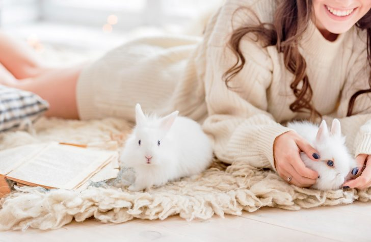 Bringing Home Bunny: 8 Helpful Bunny Care Tips to Keep Your Rabbit Healthy