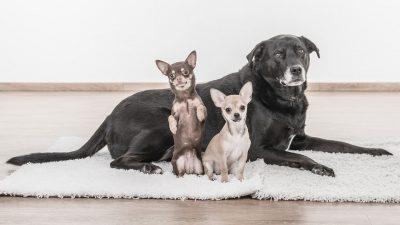 5 Benefits of Owning a Designer Dog