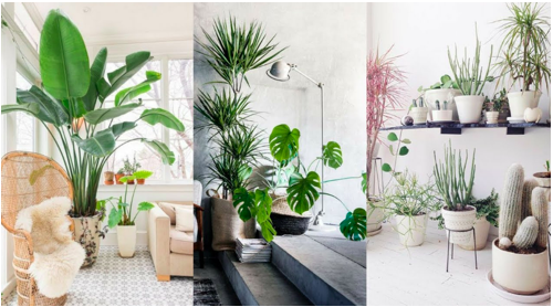 Importance of plants in your home