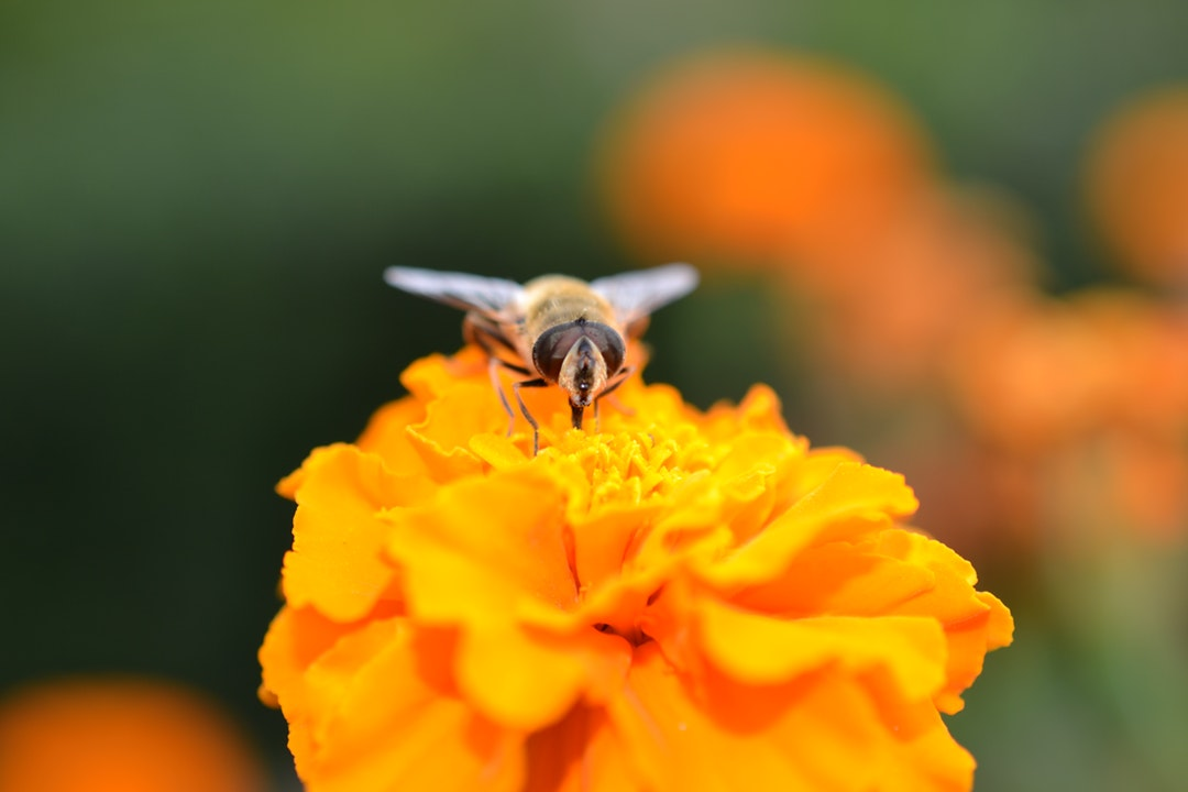 Want to Save the Human Race? Your Guide to Planting a Bee Garden