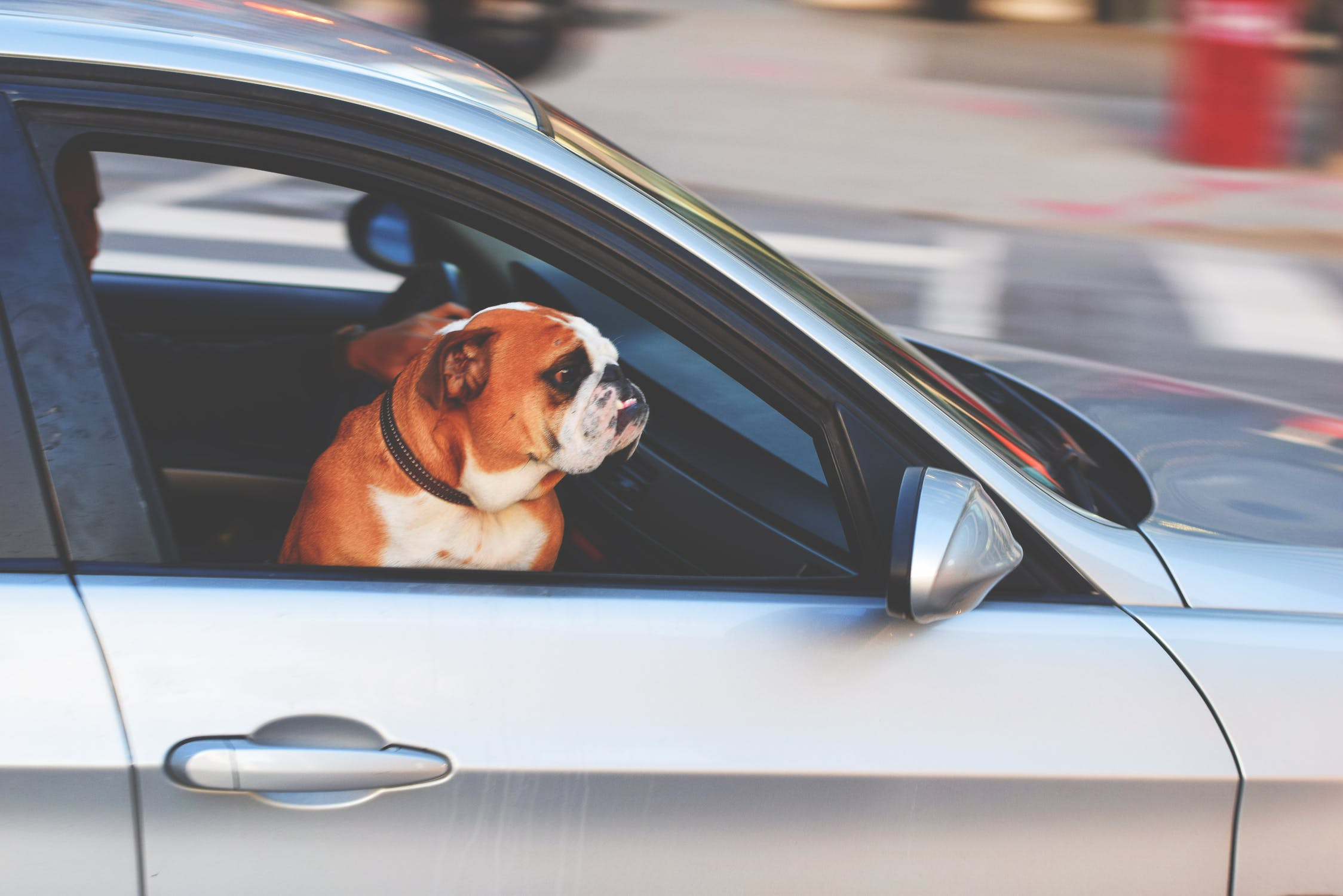1 in 3 could be breaking the Law When Driving with their Pets, Study Says