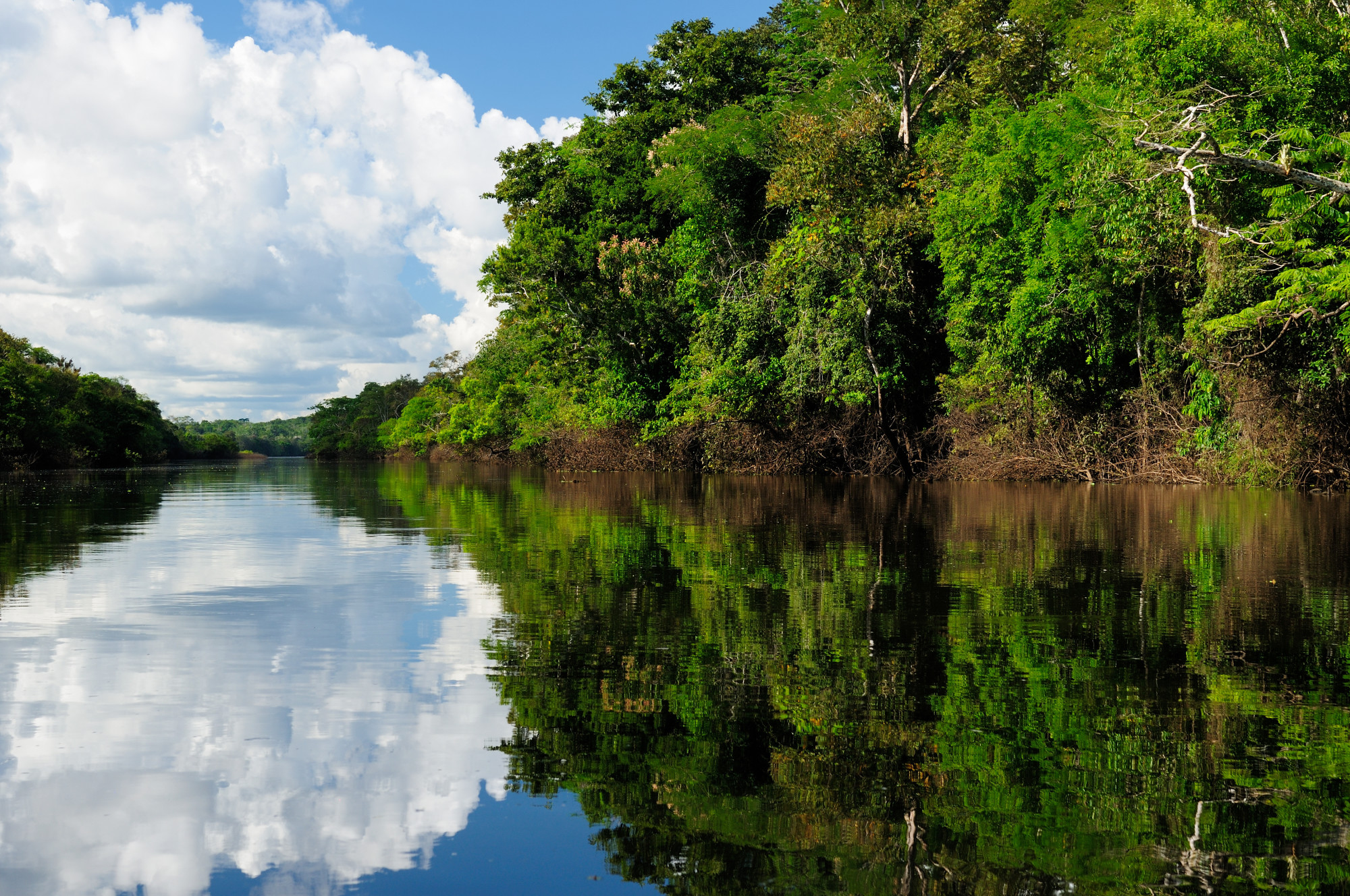 Exploring the Jungle: What to Expect on an Amazon River Cruise (with Tips for a Great Trip!)