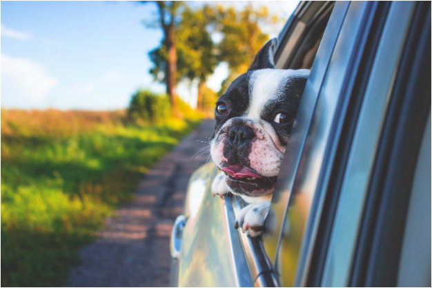5 Traveling Tips For Dog Owners