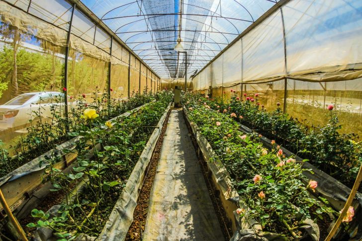 Out sunny Hoop House