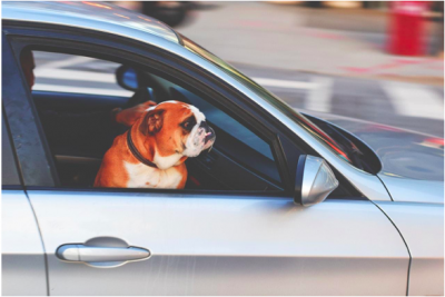 How To Plan: Prepare And Travel Comfortably With Your Pets