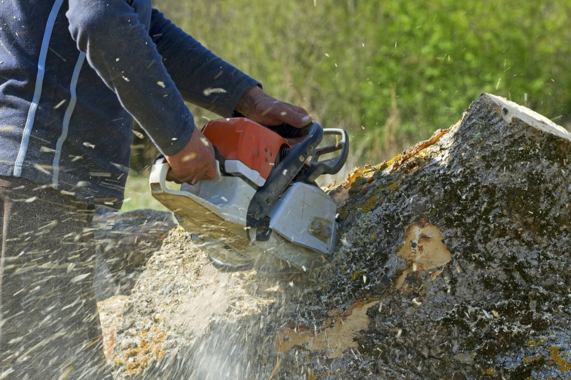 7 Key Things to Look for When Hiring a Tree Service Company