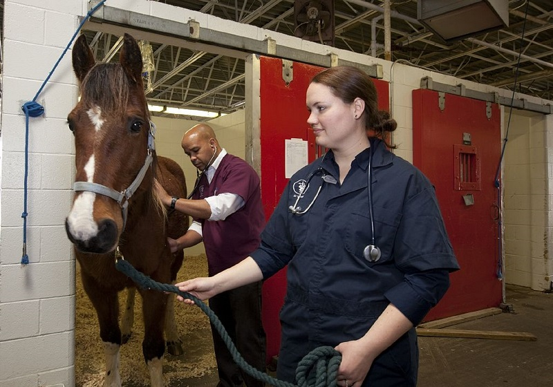 7 Amazing Tips to Keep Your Horse Healthy checkup
