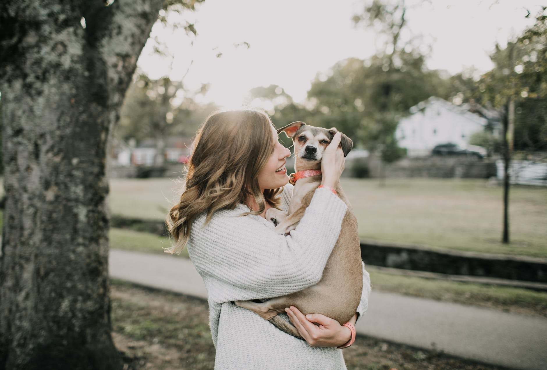 6 Steps to Having a Polite Dog With Good Manners