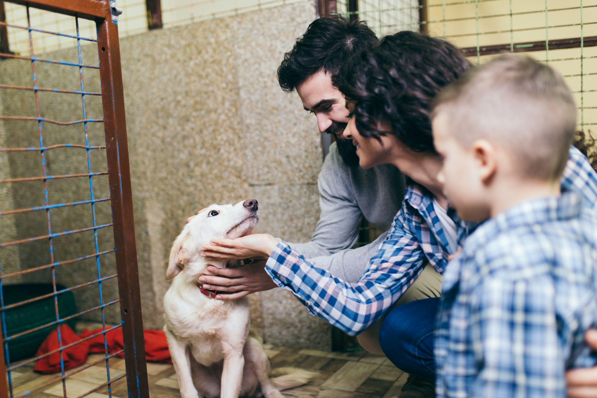Prepare for the Pup! How to Ready Your House Before Adopting a Rescue Dog