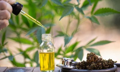 CBD Oil and its associated research